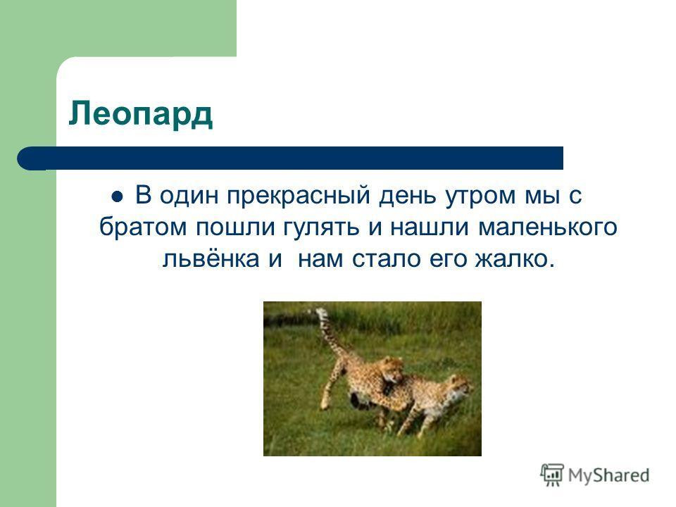Леопард В один прекрасный день утром мы с братом пошли гулять и нашли маленького львёнка и нам стало его жалко.