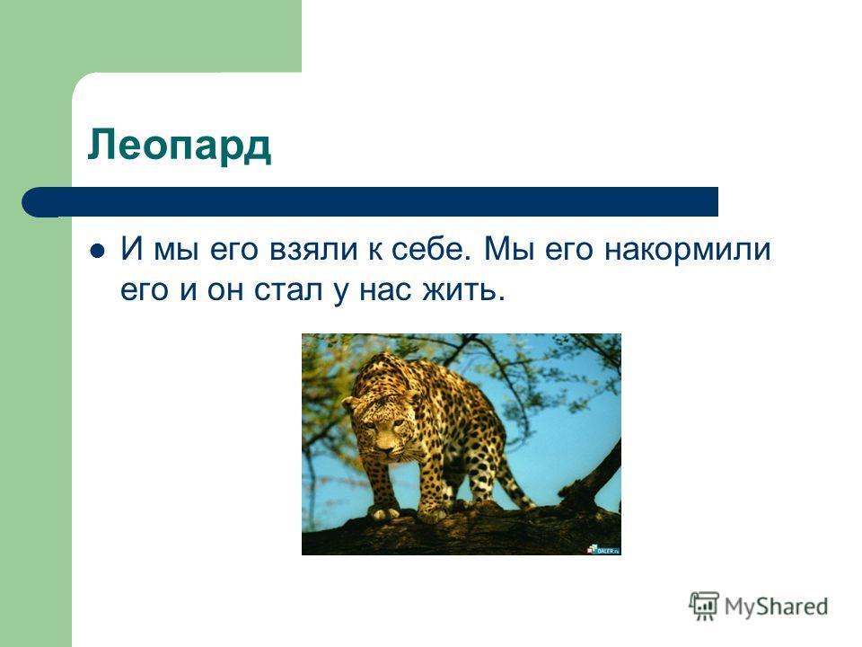 Леопард И мы его взяли к себе. Мы его накормили его и он стал у нас жить.
