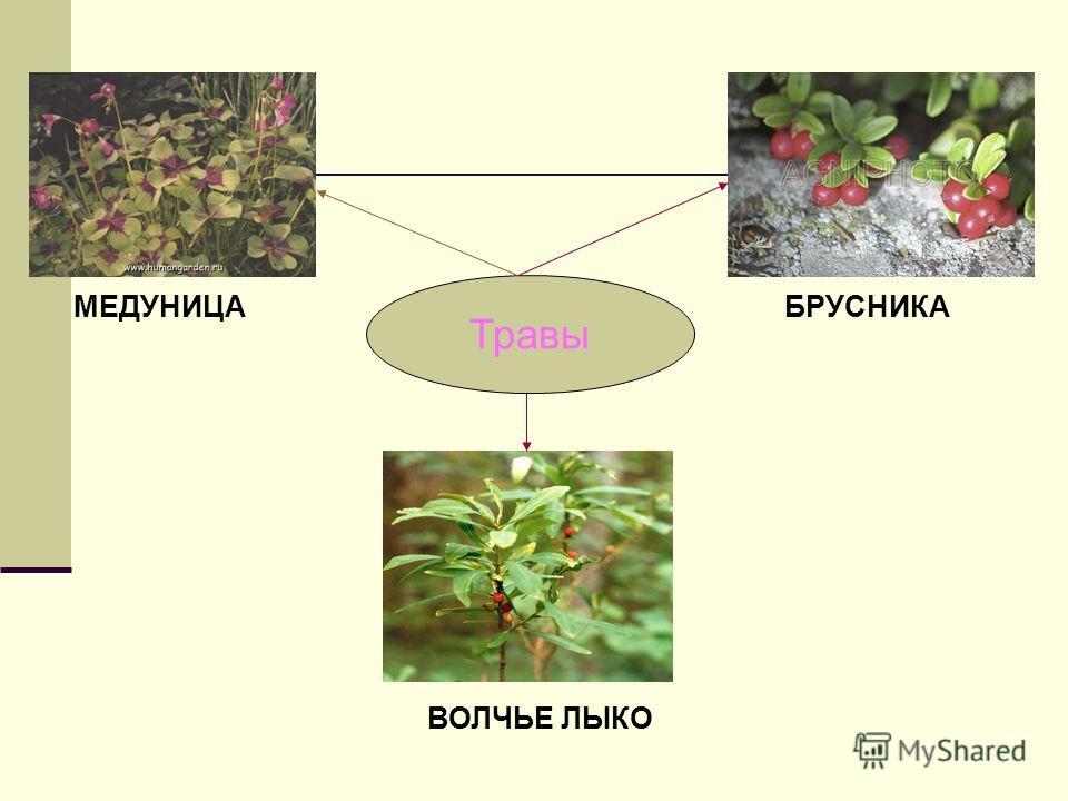 Кустарники МАЛИНА ЛЕЩИНА БАГУЛЬНИК ШИПОВНИК