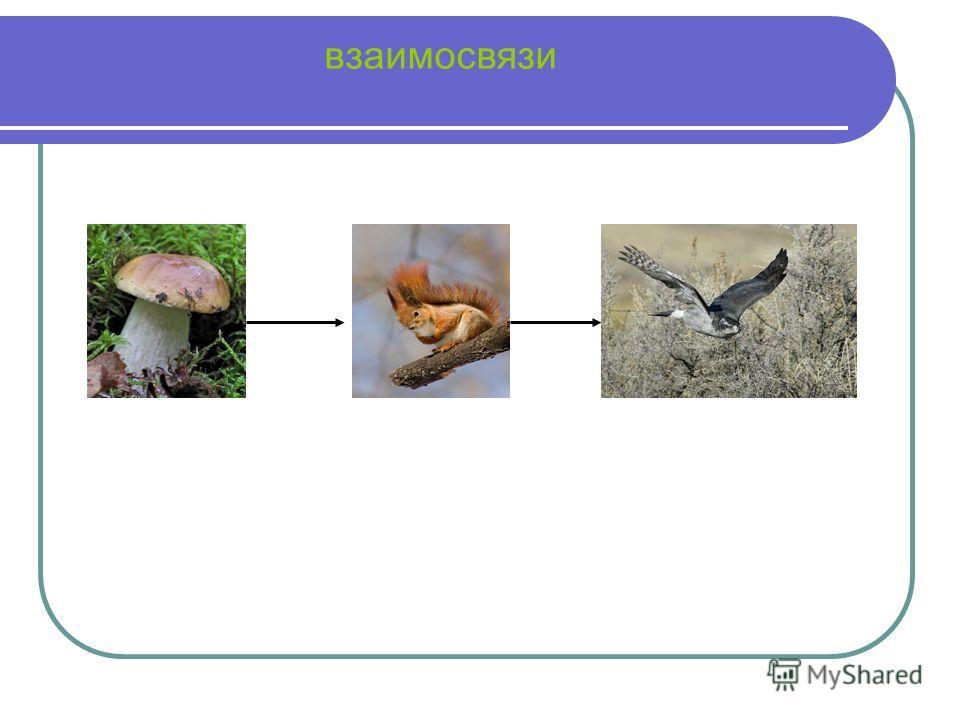 грибы съедобныенесъедобные ЛИСИЧКИ ГРИБ- БОРОВИК БЛЕДНАЯ ПОГАНКА МУХОМОР