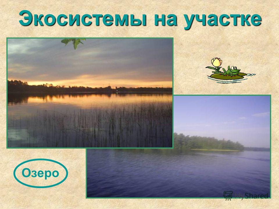 Экосистемы на участке Озеро