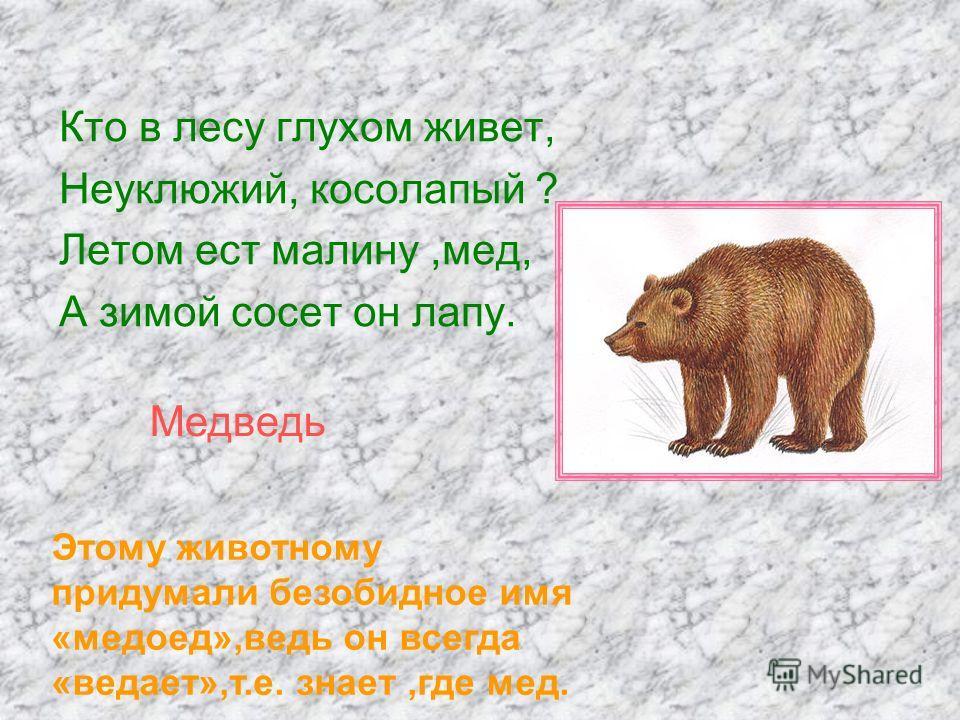 Кто в лесу глухом живет, Неуклюжий, косолапый ? Летом ест малину,мед, А зимой сосет он лапу. Медведь Этому животному придумали безобидное имя «медоед»,ведь он всегда «ведает»,т.е. знает,где мед.