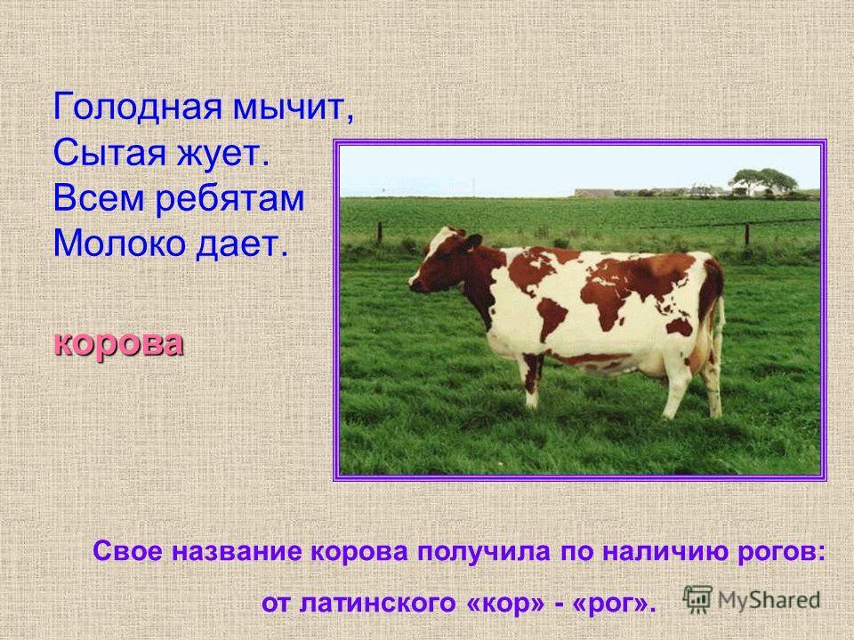 Голодная мычит, Сытая жует. Всем ребятам Молоко дает. корова Свое название корова получила по наличию рогов: от латинского «кор» - «рог».