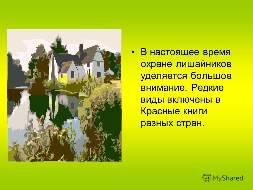 В настоящее время охране лишайников уделяется большое внимание. Редкие виды включены в Красные книги разных стран.