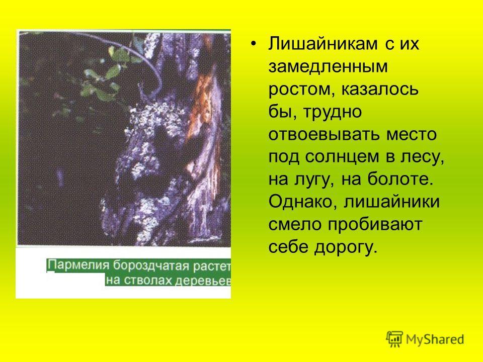 Лишайникам с их замедленным ростом, казалось бы, трудно отвоевывать место под солнцем в лесу, на лугу, на болоте. Однако, лишайники смело пробивают себе дорогу.