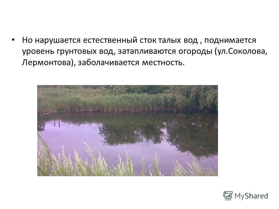 Но нарушается естественный сток талых вод, поднимается уровень грунтовых вод, затапливаются огороды (ул.Соколова, Лермонтова), заболачивается местность.