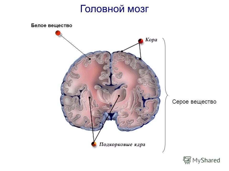 Серое вещество Белое вещество Головной мозг