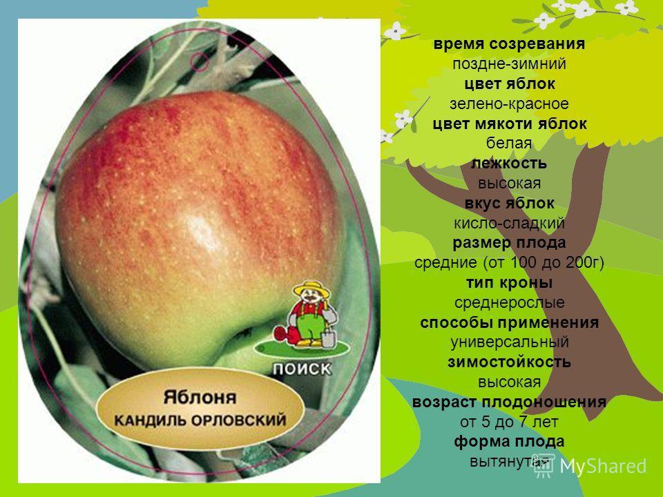 время созревания поздне-зимний цвет яблок зелено-красное цвет мякоти яблок белая лежкость высокая вкус яблок кисло-сладкий размер плода средние (от 100 до 200г) тип кроны среднерослые способы применения универсальный зимостойкость высокая возраст пло