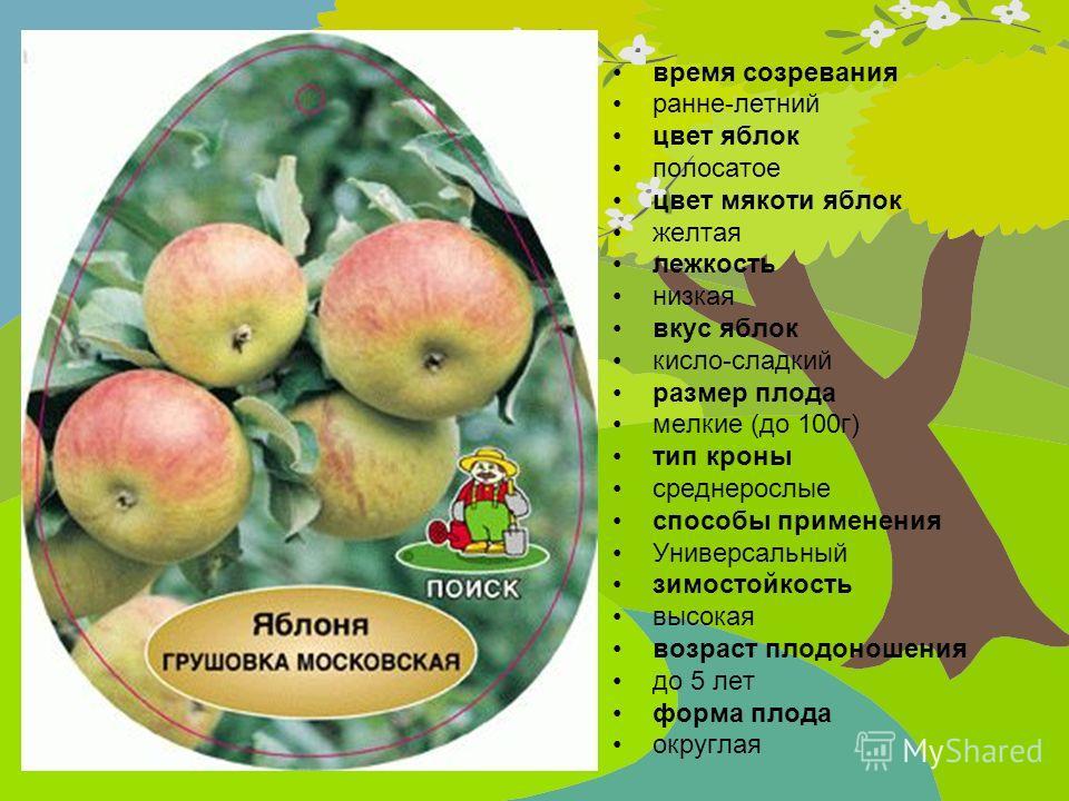 время созревания ранне-летний цвет яблок полосатое цвет мякоти яблок желтая лежкость низкая вкус яблок кисло-сладкий размер плода мелкие (до 100г) тип кроны среднерослые способы применения Универсальный зимостойкость высокая возраст плодоношения до 5