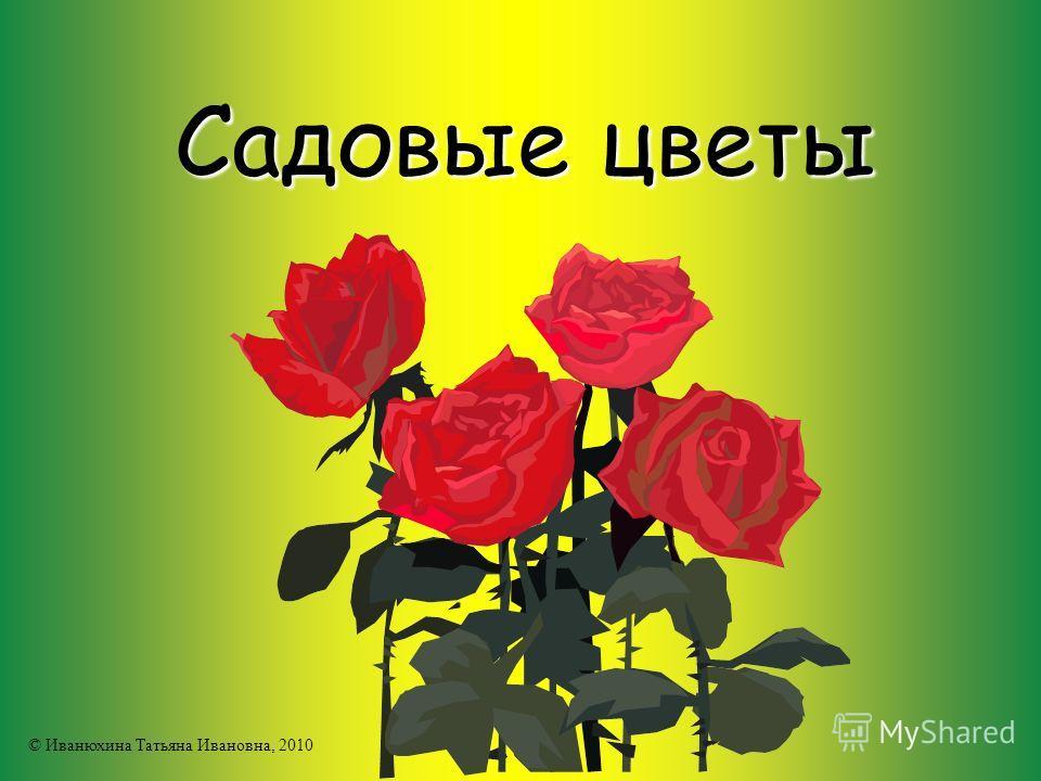 Садовые цветы © Иванюхина Татьяна Ивановна, 2010