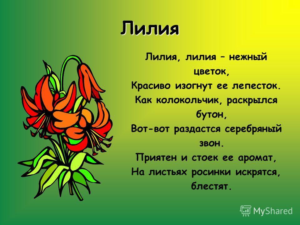 Лилия Лилия, лилия – нежный цветок, Красиво изогнут ее лепесток. Как колокольчик, раскрылся бутон, Вот-вот раздастся серебряный звон. Приятен и стоек ее аромат, На листьях росинки искрятся, блестят.