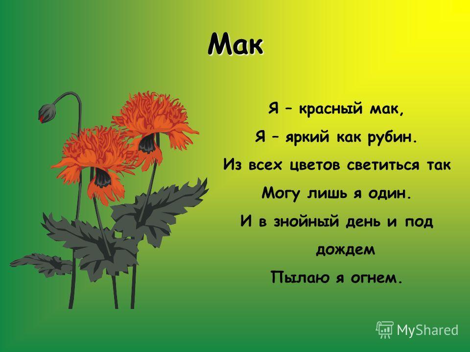 Мак Я – красный мак, Я – яркий как рубин. Из всех цветов светиться так Могу лишь я один. И в знойный день и под дождем Пылаю я огнем.