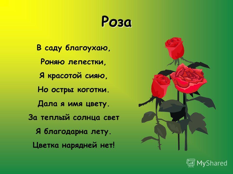 Роза В саду благоухаю, Роняю лепестки, Я красотой сияю, Но остры коготки. Дала я имя цвету. За теплый солнца свет Я благодарна лету. Цветка нарядней нет!