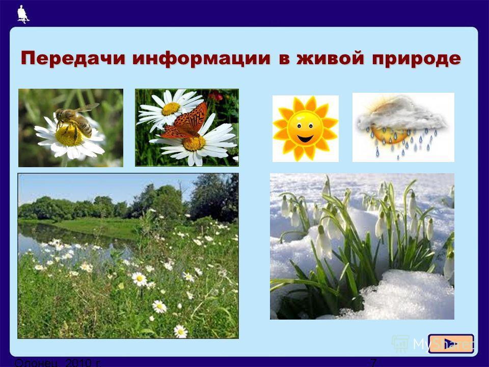 Олонец, 2010 г.7 Передачи информации в живой природе