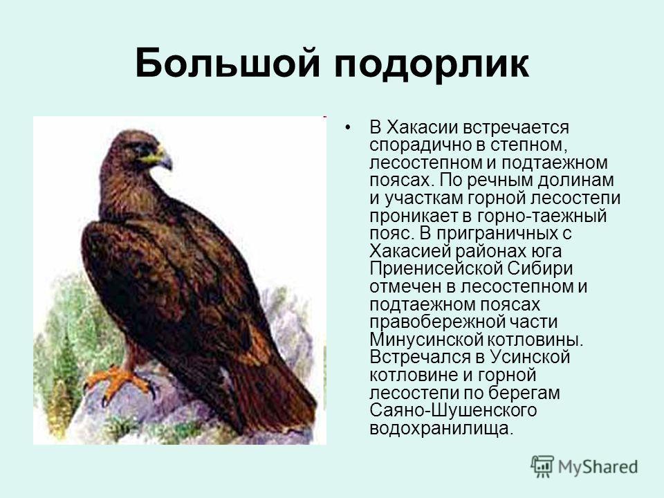 Большой подорлик В Хакасии встречается спорадично в степном, лесостепном и подтаежном поясах. По речным долинам и участкам горной лесостепи проникает в горно-таежный пояс. В приграничных с Хакасией районах юга Приенисейской Сибири отмечен в лесостепн