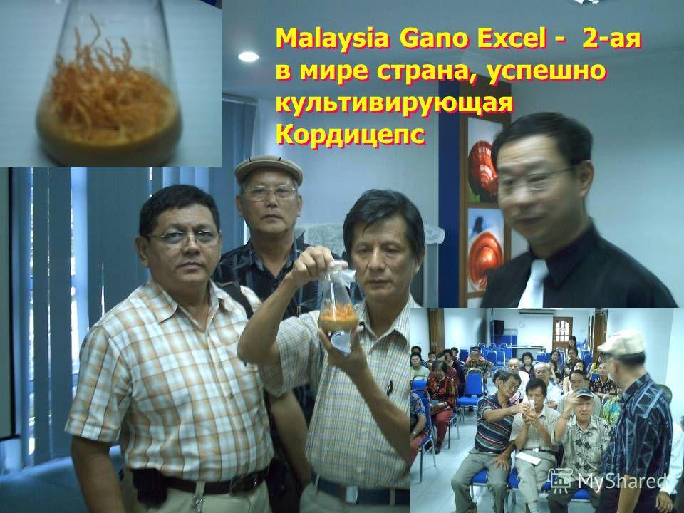 Malaysia Gano Excel - 2-ая в мире страна, успешно культивирующая Кордицепс