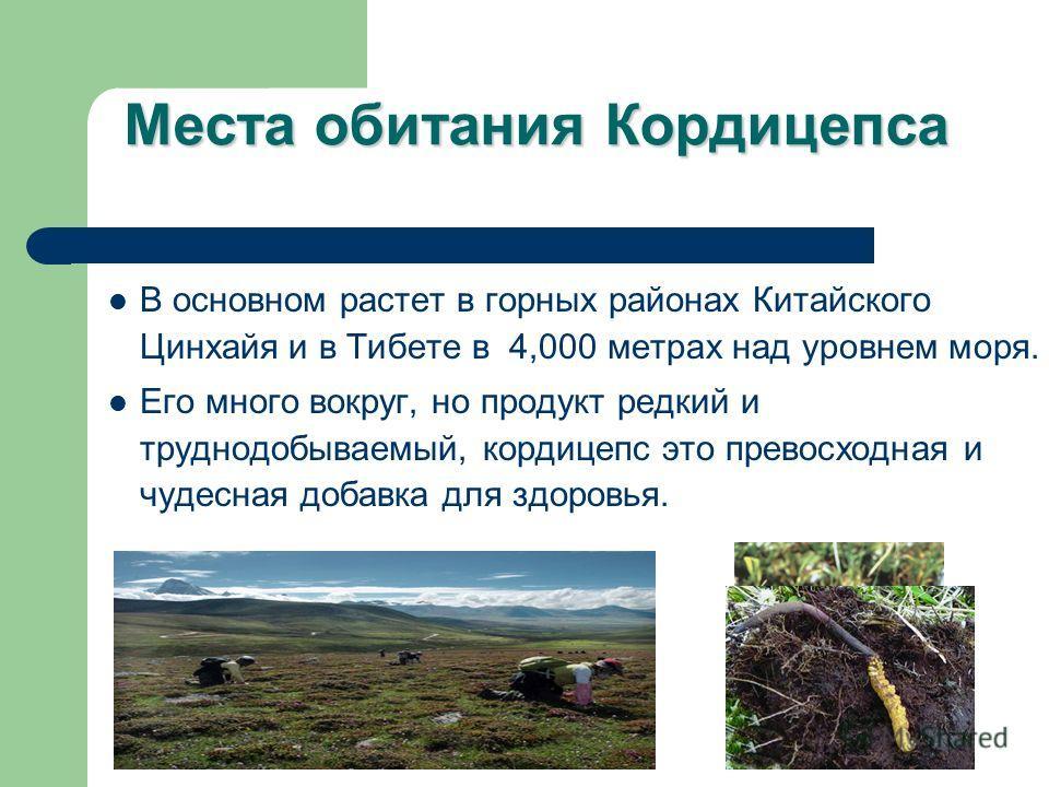 Места обитания Кордицепса В основном растет в горных районах Китайского Цинхайя и в Тибете в 4,000 метрах над уровнем моря. Его много вокруг, но продукт редкий и труднодобываемый, кордицепс это превосходная и чудесная добавка для здоровья.