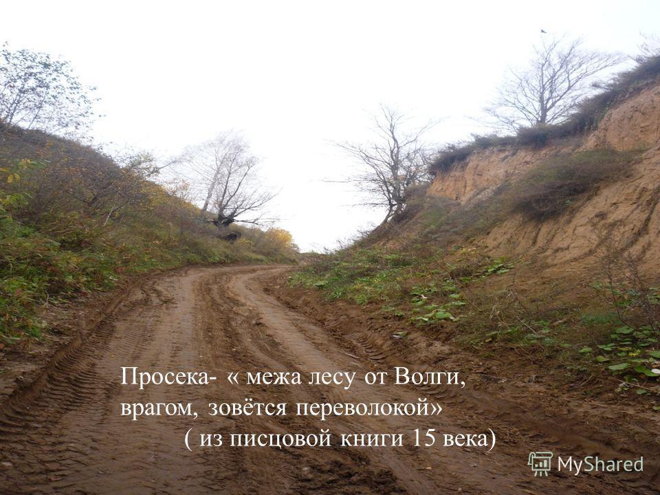 Просек Просека « межа лесу от Волги, врагом, зовется Переволокой. Просека « межа лесу от Волги, врагом, зовется Переволокой. (из Писцовой книги 15 века) (из Писцовой книги 15 века) Просека- « межа лесу от Волги, врагом, зовётся переволокой» ( из писц