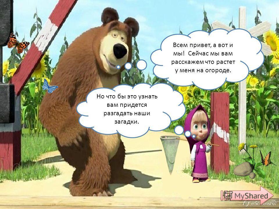 Медведь взял семена и посадил: огурцы, морковь, помидор, редис, баклажан, лук, петрушку, подсолнух, кукурузу. Подросла рассада. Бабочки летают пыльцу собирают, божья коровка тлю поедает, пчелка нектар собирает, стрекоза от жары защищает. А Машенька ц
