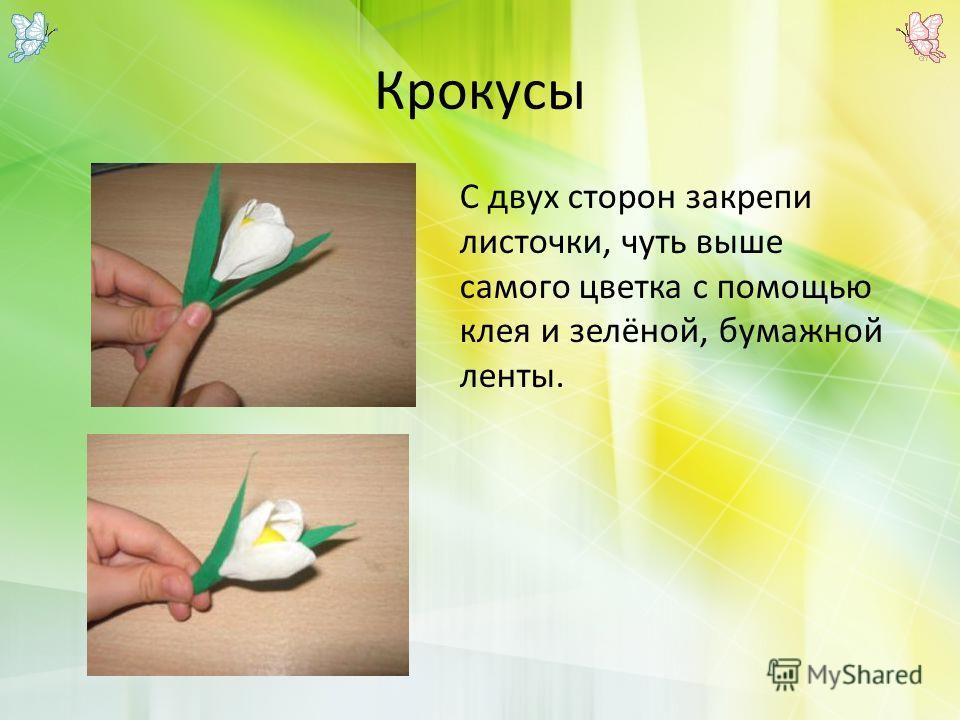 Крокусы С двух сторон закрепи листочки, чуть выше самого цветка с помощью клея и зелёной, бумажной ленты.