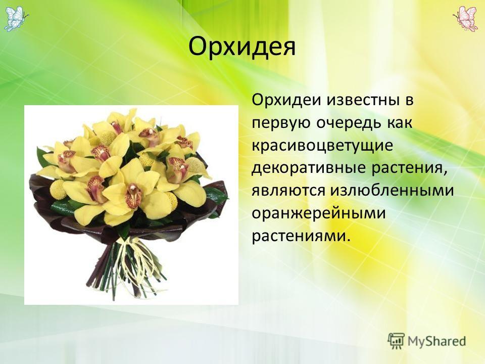 Орхидея Орхидеи известны в первую очередь как красивоцветущие декоративные растения, являются излюбленными оранжерейными растениями.