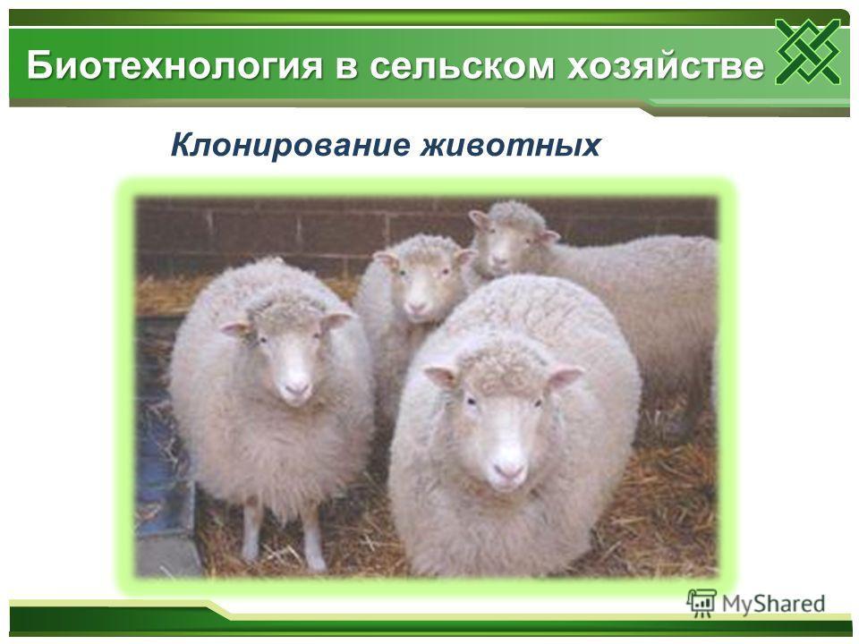 Клонирование животных Биотехнология в сельском хозяйстве