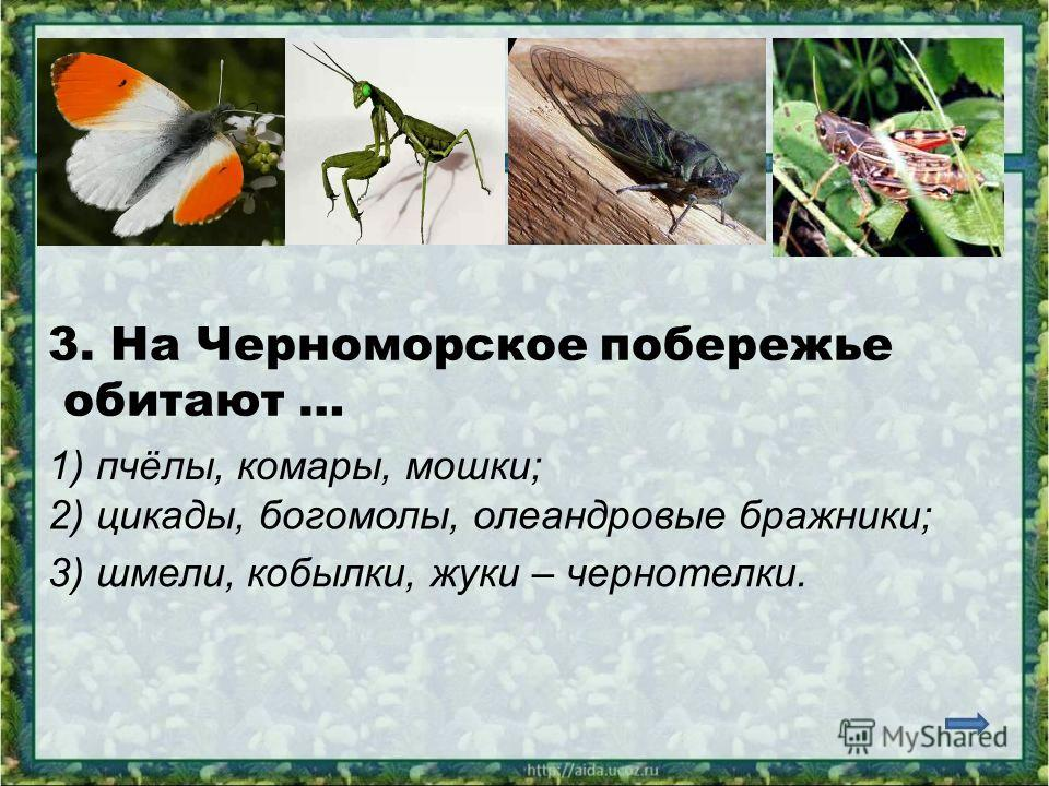 3. На Черноморское побережье обитают … 1) пчёлы, комары, мошки; 2) цикады, богомолы, олеандровые бражники; 3) шмели, кобылки, жуки – чернотелки.