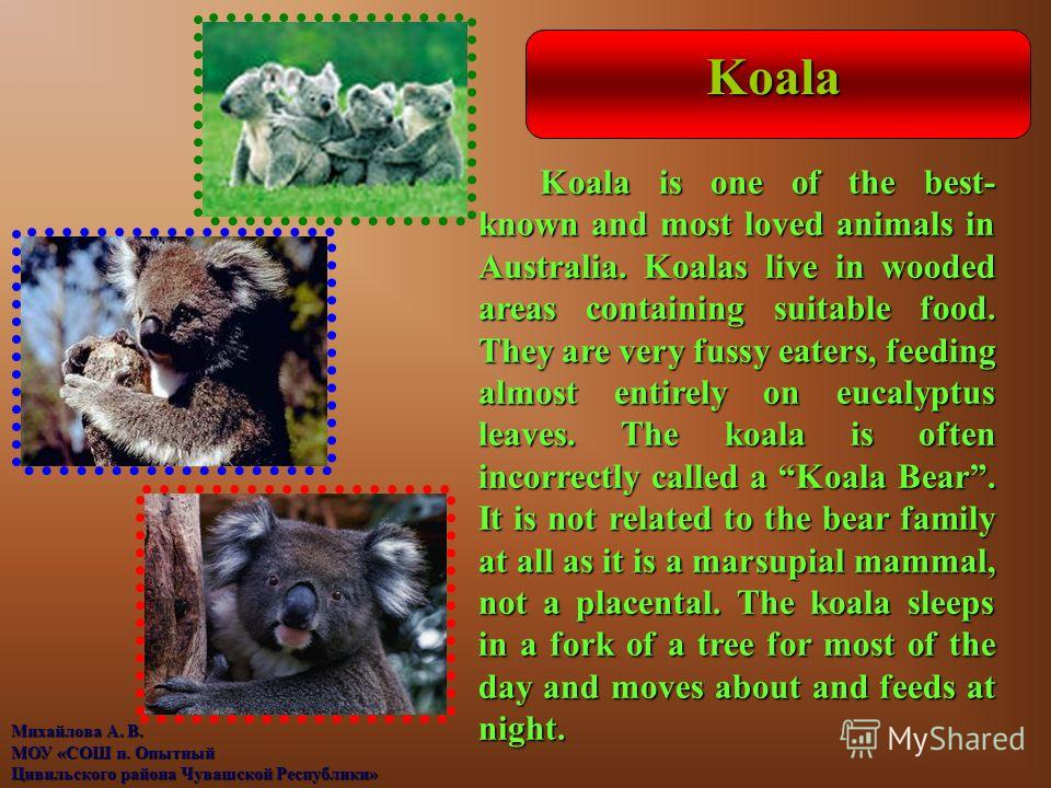 Koala Koala is one of the best- known and most loved animals in Australia. Koalas live in wooded areas containing suitable food. They are very fussy eaters, feeding almost entirely on eucalyptus leaves. The koala is often incorrectly called a Koala B