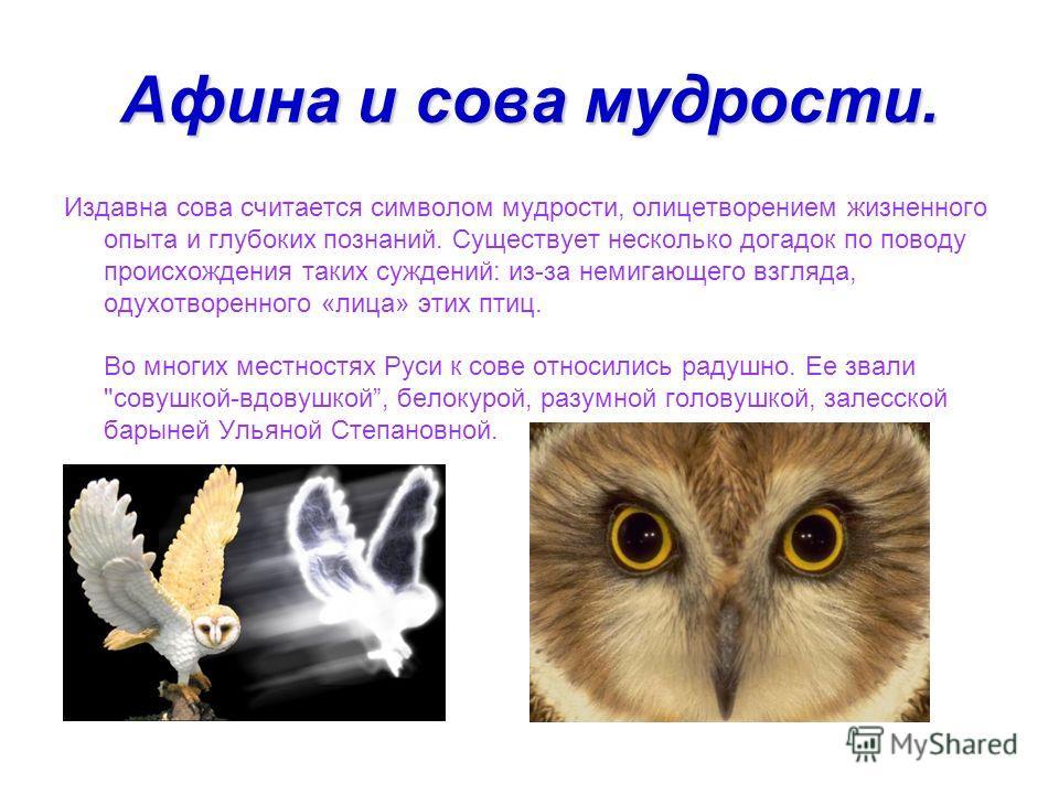 Афина и сова мудрости. Издавна сова считается символом мудрости, олицетворением жизненного опыта и глубоких познаний. Существует несколько догадок по поводу происхождения таких суждений: из-за немигающего взгляда, одухотворенного «лица» этих птиц. Во