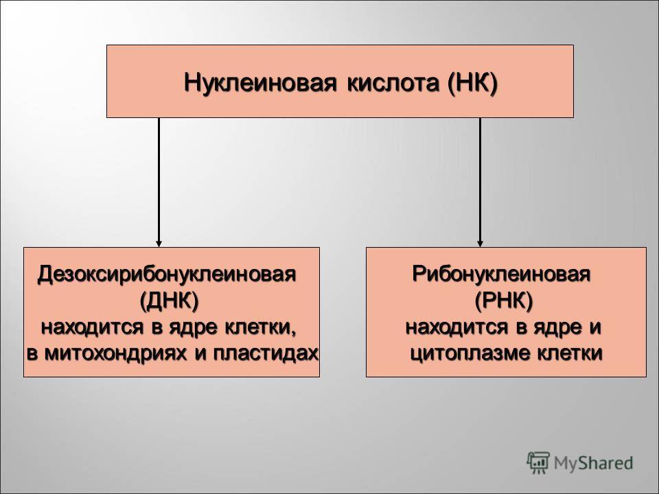 Нуклеиновая кислота (НК) Дезоксирибонуклеиновая (ДНК) находится в ядре клетки, находится в ядре клетки, в митохондриях и пластидах в митохондриях и пластидах Рибонуклеиновая (РНК) находится в ядре и находится в ядре и цитоплазме клетки цитоплазме кле