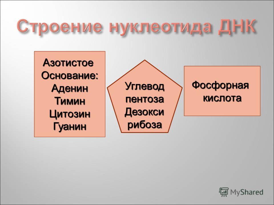 АзотистоеОснование:АденинТиминЦитозинГуанин Фосфорнаякислота Углевод пентоза Дезокси рибоза