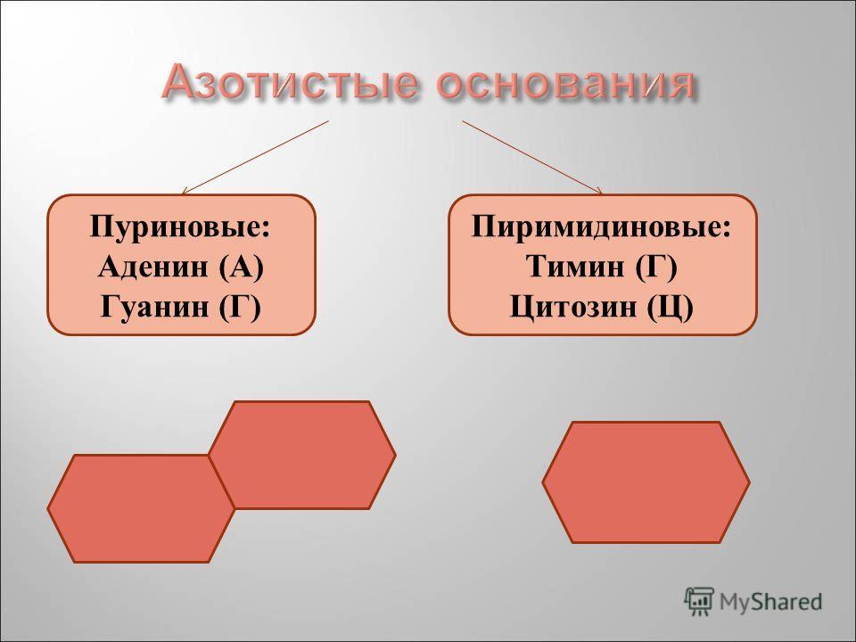 Пуриновые: Аденин (А) Гуанин (Г) Пиримидиновые: Тимин (Г) Цитозин (Ц)