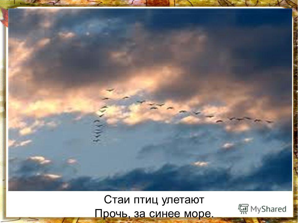 Стаи птиц улетают Прочь, за синее море.