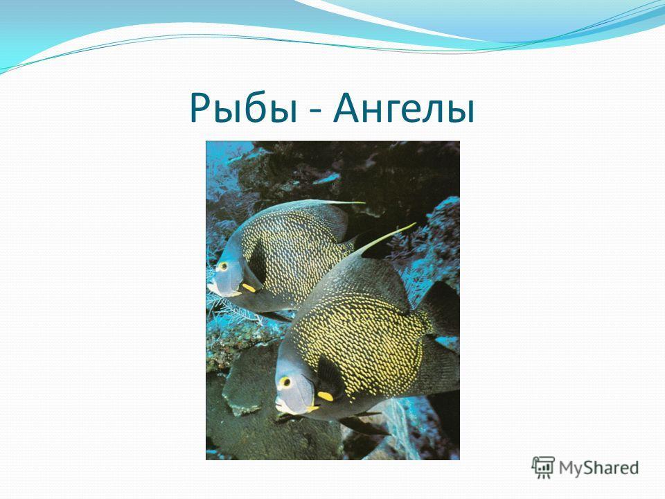 Рыбы - Ангелы