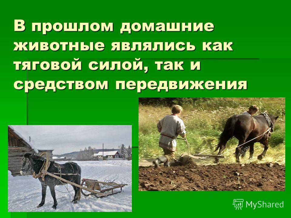 В прошлом домашние животные являлись как тяговой силой, так и средством передвижения