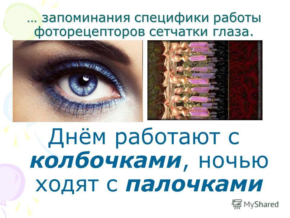 … запоминания специфики работы фоторецепторов сетчатки глаза. Днём работают с колбочками, ночью ходят с палочками