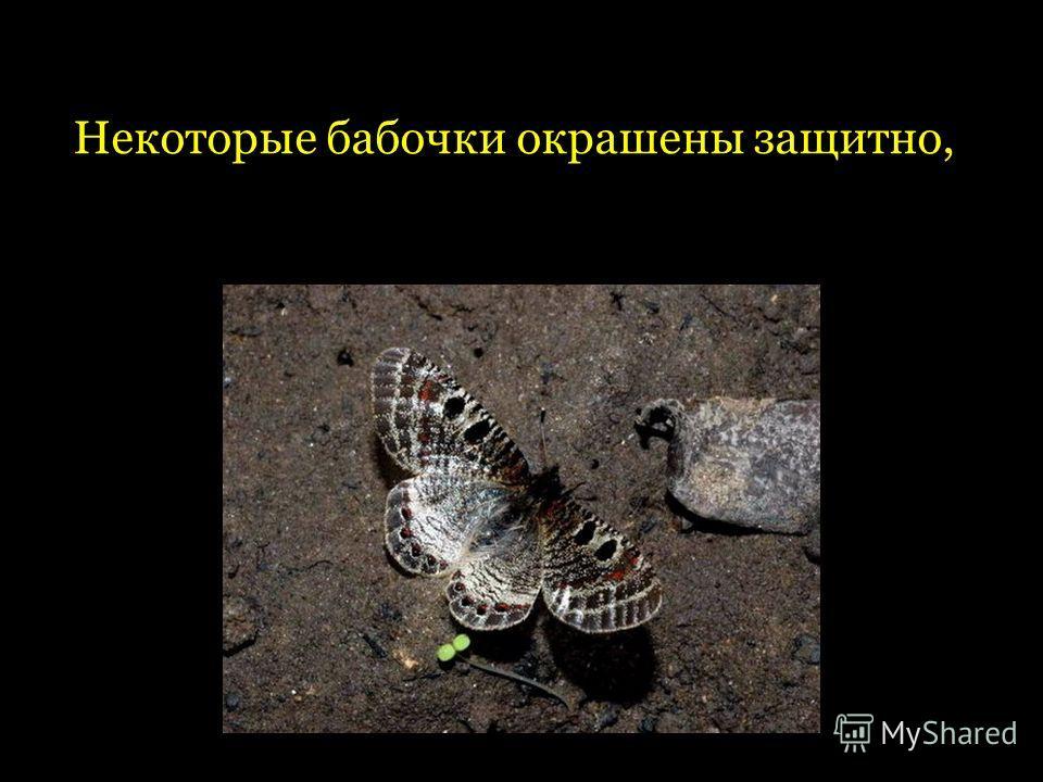 Некоторые бабочки окрашены защитно,