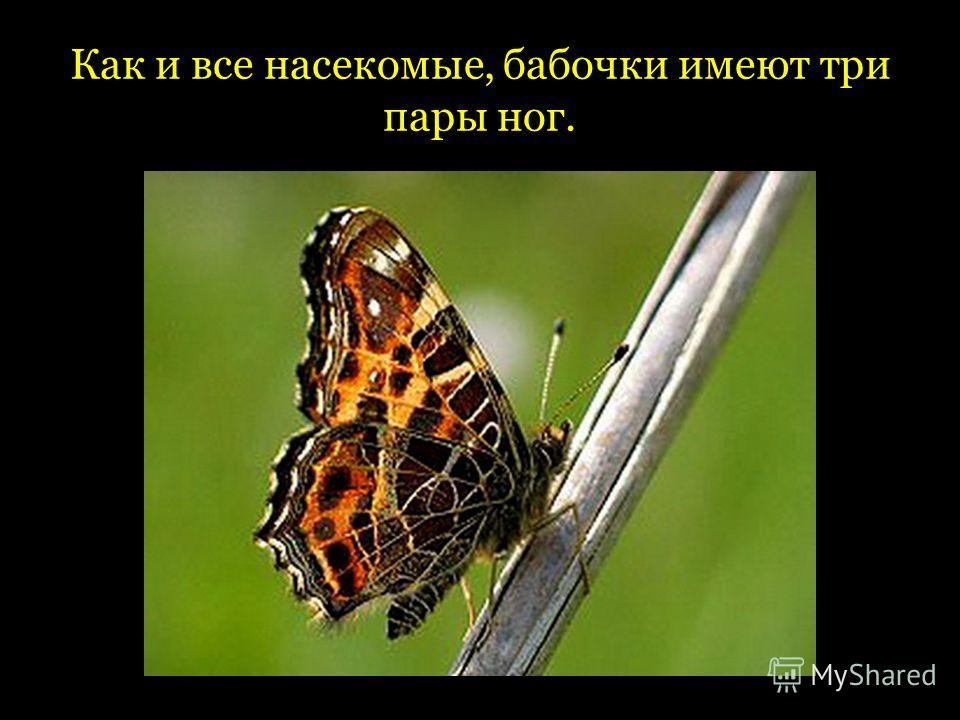 Как и все насекомые, бабочки имеют три пары ног.
