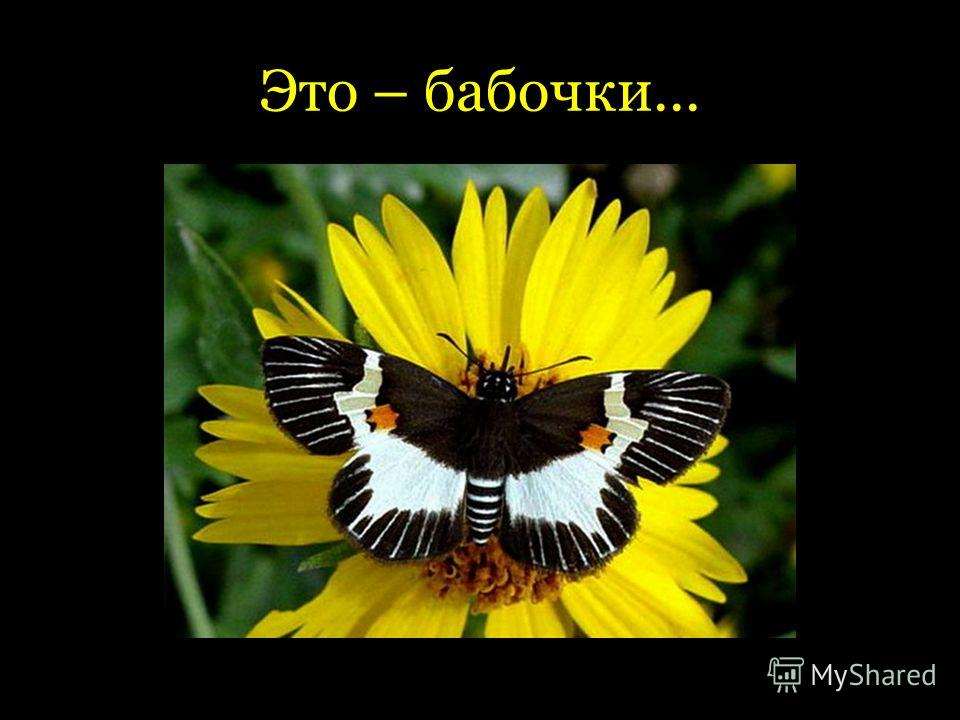 Это – бабочки...