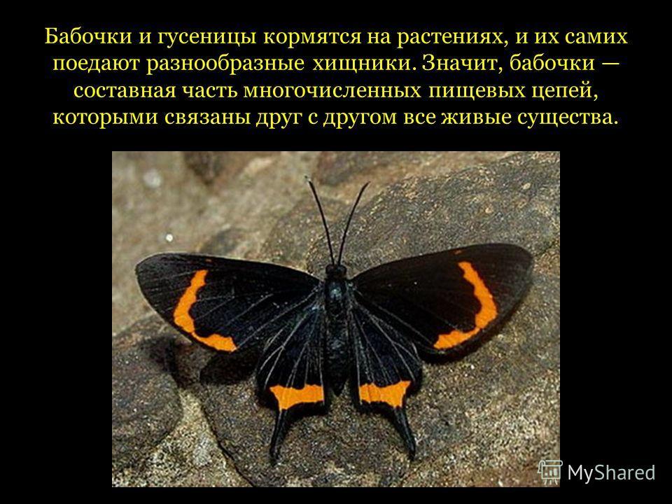 Бабочки и гусеницы кормятся на растениях, и их самих поедают разнообразные хищники. Значит, бабочки составная часть многочисленных пищевых цепей, которыми связаны друг с другом все живые существа.