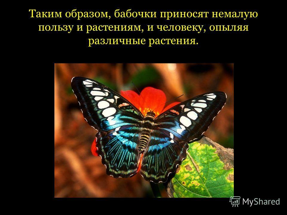 Таким образом, бабочки приносят немалую пользу и растениям, и человеку, опыляя различные растения.