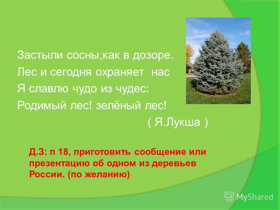 Застыли сосны,как в дозоре. Лес и сегодня охраняет нас Я славлю чудо из чудес: Родимый лес! зелёный лес! ( Я.Лукша ) Д.З: п 18, приготовить сообщение или презентацию об одном из деревьев России. (по желанию)