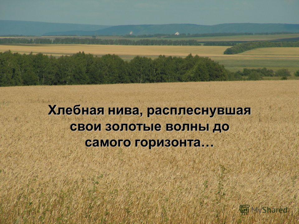 Хлебная нива, расплеснувшая свои золотые волны до самого горизонта…