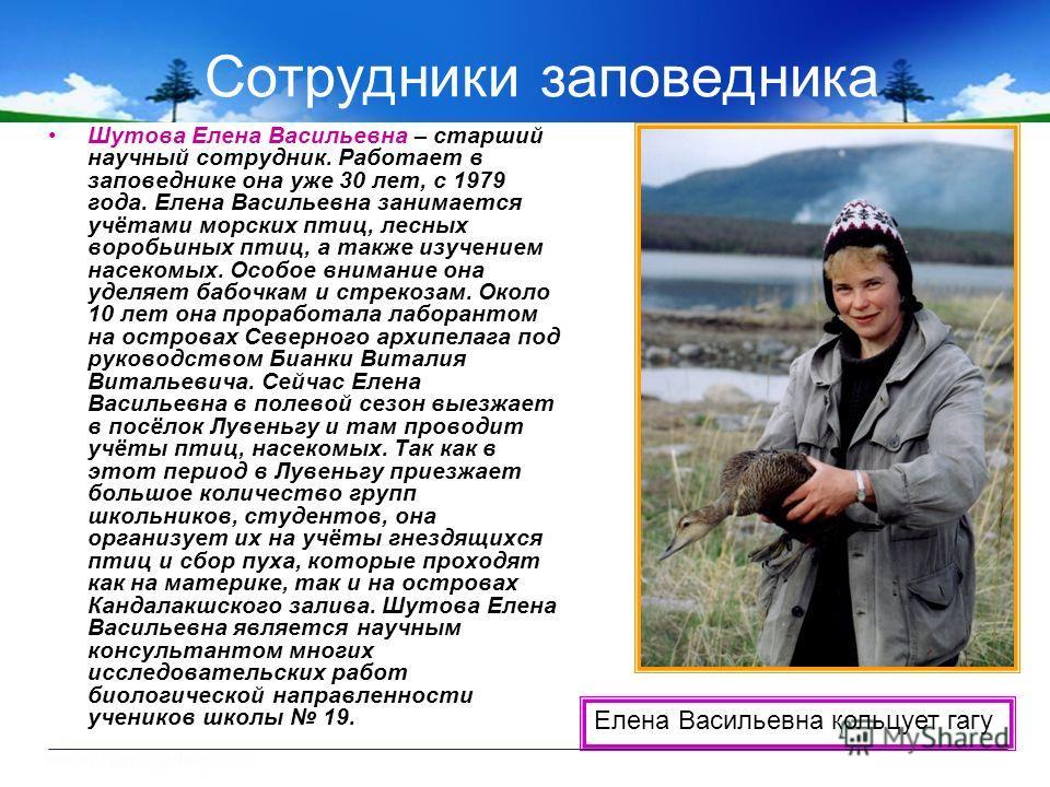 Сотрудники заповедника Шутова Елена Васильевна – старший научный сотрудник. Работает в заповеднике она уже 30 лет, с 1979 года. Елена Васильевна занимается учётами морских птиц, лесных воробьиных птиц, а также изучением насекомых. Особое внимание она