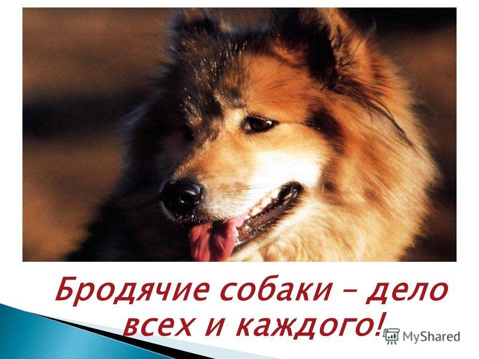 Бродячие собаки – дело всех и каждого!