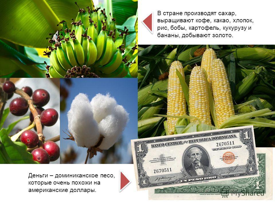 В стране производят сахар, выращивают кофе, какао, хлопок, рис, бобы, картофель, кукурузу и бананы, добывают золото. Деньги – доминиканское песо, которые очень похожи на американские доллары.