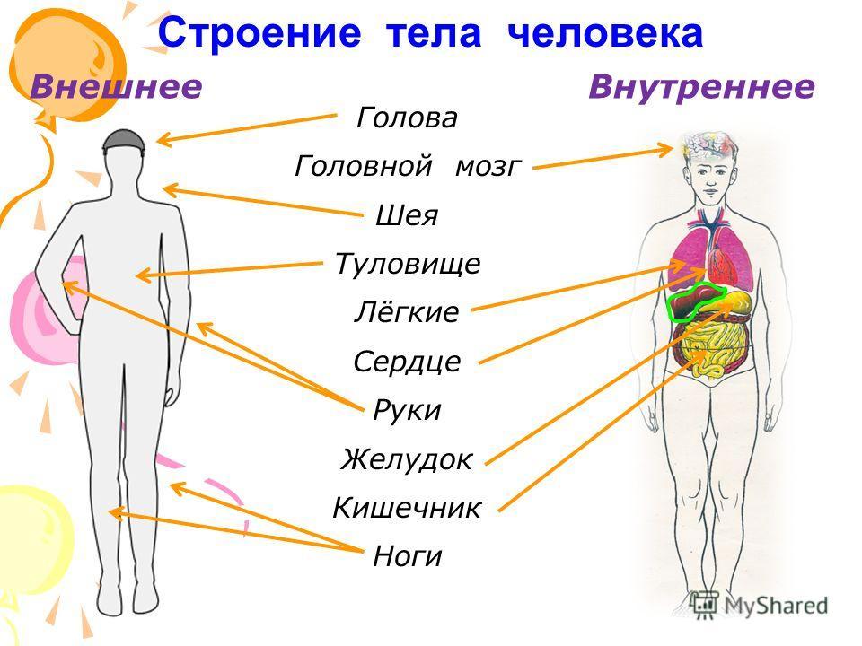 «Строение тела человека» с. 4, 3