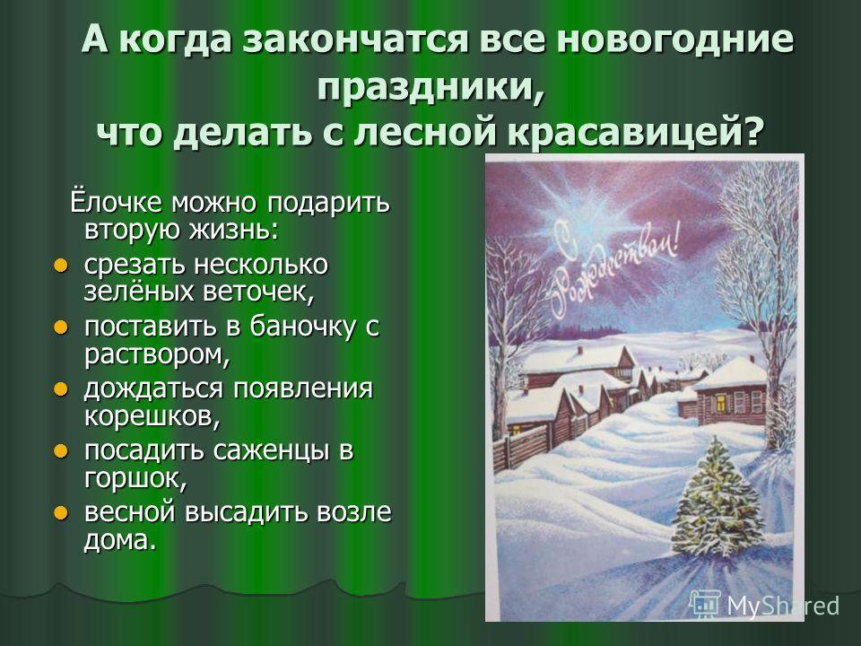 А когда закончатся все новогодние праздники, что делать с лесной красавицей? А когда закончатся все новогодние праздники, что делать с лесной красавицей? Ёлочке можно подарить вторую жизнь: Ёлочке можно подарить вторую жизнь: срезать несколько зелёны