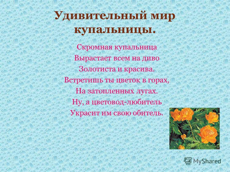 Удивительный мир купальницы. Скромная купальница Вырастает всем на диво Золотиста и красива. Встретишь ты цветок в горах, На затопленных лугах. Ну, а цветовод-любитель Украсит им свою обитель.