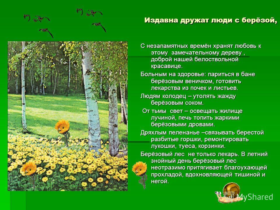 Издавна дружат люди с берёзой, С незапамятных времён хранят любовь к этому замечательному дереву, доброй нашей белоствольной красавице. Больным на здоровье: париться в бане берёзовым веничком, готовить лекарства из почек и листьев. Людям колодец – ут